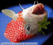 Pesce fragola