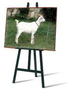 mi dai un tuo quadro per una capra?